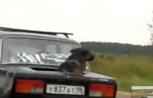 Kutyavilág Oroszországban