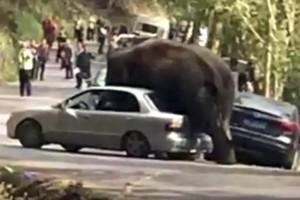 Parkoló autókat tapos szét egy elefánt Kínában