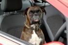 Kutya dolog a parkolás a Corsában