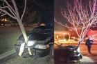 Ötméteres fa ékelődött az autó orrába, de a nő csak ment tovább