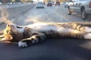 Ez a kocsiban napozó macska megcsinálja a napod