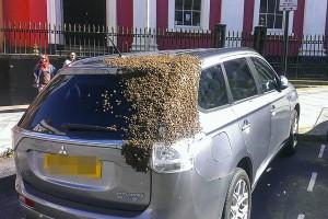 20000 méh üldözte a hibridet, kitalálod, miért?