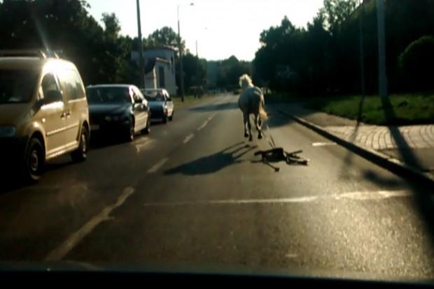 Az autók között vágtázott egy ló Borsodban
