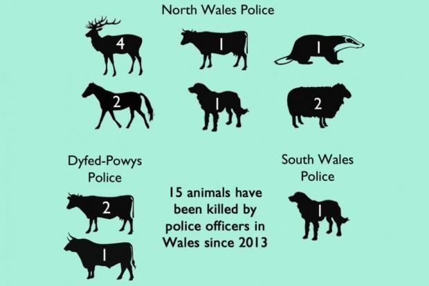 rendőrség állat megöl