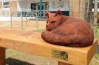 Emlékművet emeltek az elgázolt macskának