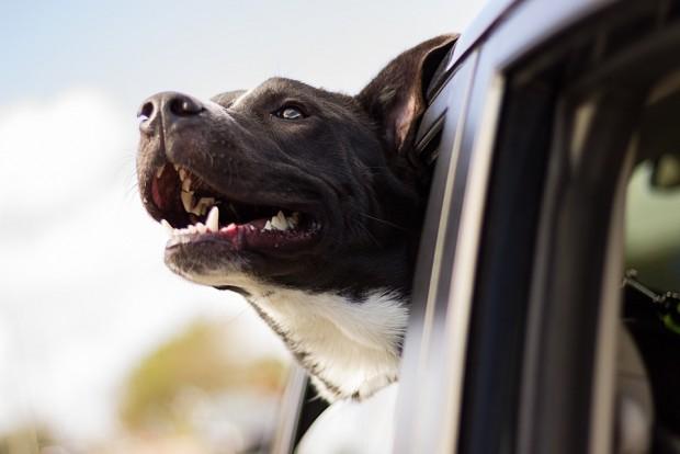 Kutyával raboltak ki egy autót