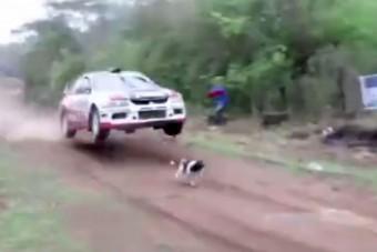 Pályán kóborló kutya felett ugratott át a raliautó