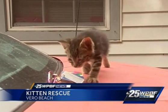 Feláldozta kocsiját, hogy mentse a kiscicát