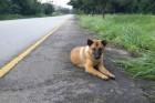 Elpusztult a világ leghűségesebb kutyája