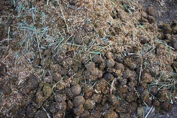 Livestock-manure