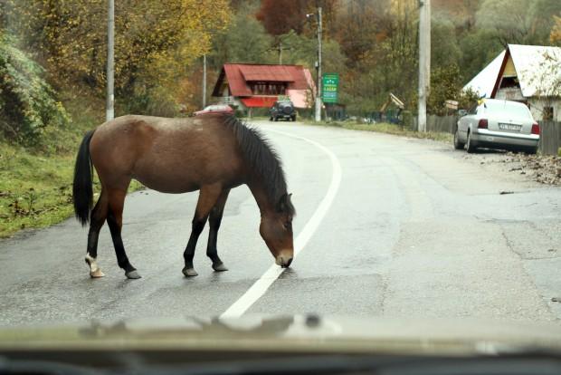 Ló nyal esővizet a záróvonalról