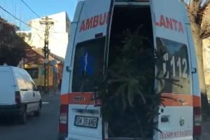 Zöld gyantás tetemet szállított egy román mentő