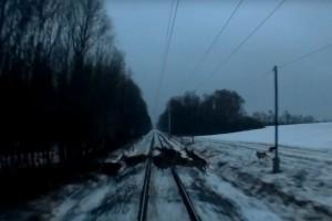 Videón a vonat előtt átrohanó őzcsapat