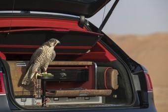 Vegyél solymászkészletet a Bentley-dhez, csak most, csak neked