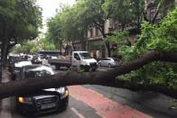 Kidőlt egy fa az Andrássy útra – fotók