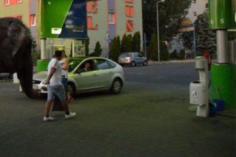Ilyennel sem álltak még be magyar benzinkútra
