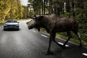 Na melyik állatot nem ismeri fel a Volvo állatfelismerő fékrendszere?