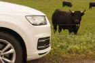 Asszisztens kéne a sok asszisztenshez – kipróbáltuk az új Audi Q7-est