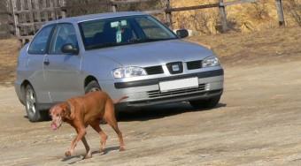 Használt autó: SEAT Cordoba