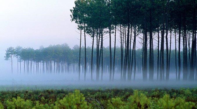 Az erdők kiírtása rontja a levegő minőségét