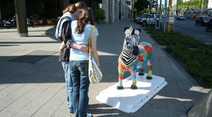 Nagy sikere van a zebráknak