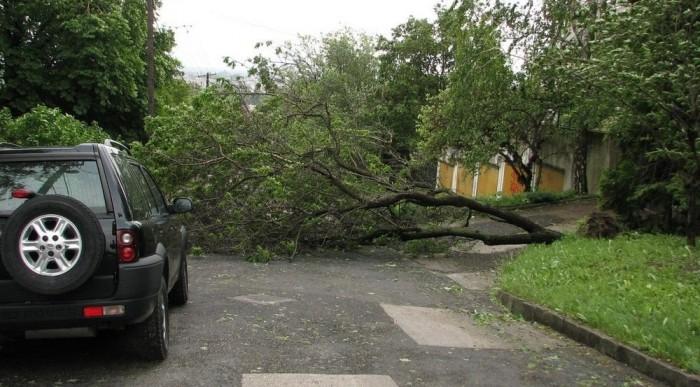 Alsózöldmáli út: lezárja egy fa