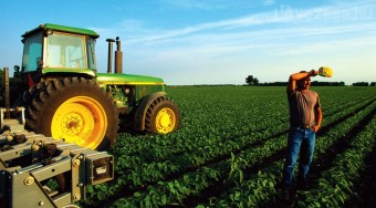 Dísznövényből üzemanyagot