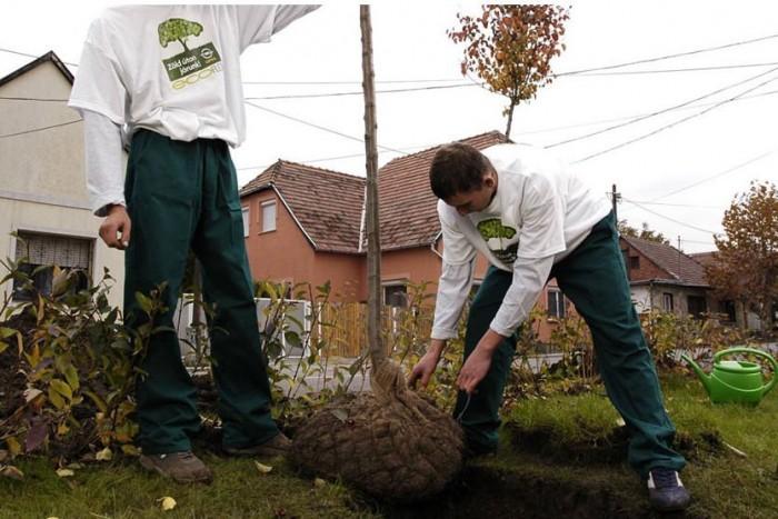 Nálunk is: a General Motors magyarországi stábja néhány éve a nyári hónapokban értékesített autók után ültetett el egy-egy fát.