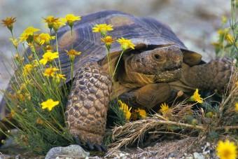 Garázstűz egy teknős tüzes vágya miatt