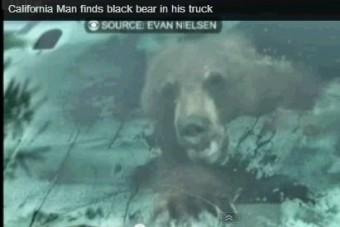 Medvét talált teherautójában - a vezetőülésen