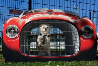 Ahol még a kutyák is Ferrariban ülnek