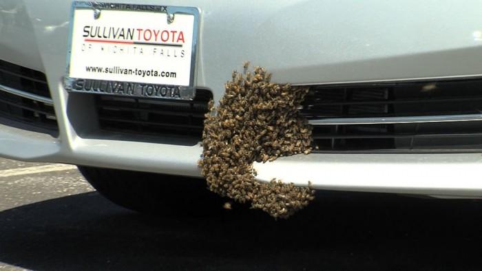 Nemcsak balesetet, de jogi bonyodalmat is okozott egy méh, és úgy tűnik a rovar által megzavart sofőrnek mindenképp fizetnie kell