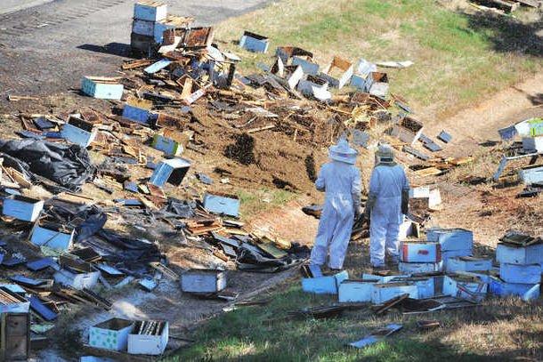 Méhészek a Georgia állambeli Forsyth közelében felborult kamion utasait mentik.