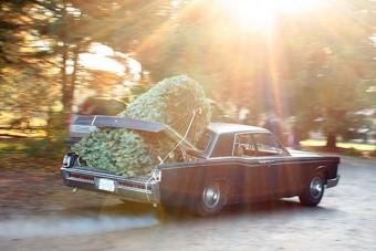 Hogyan ne vigyük haza a karácsonyfát?
