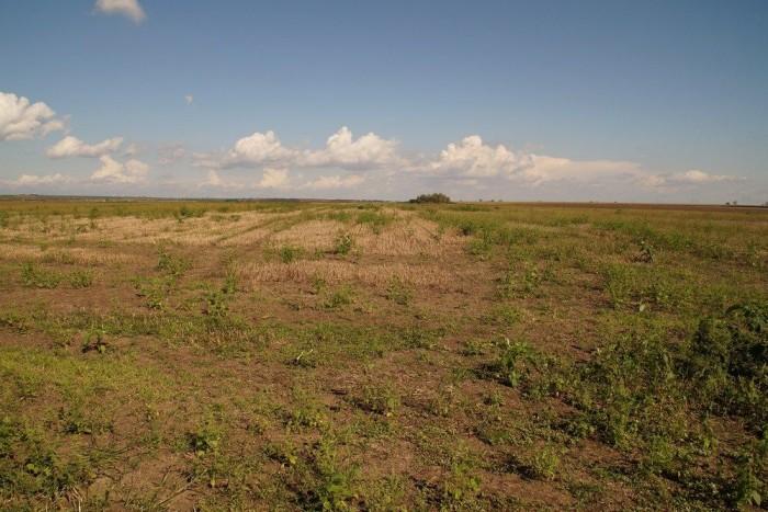 Fura érzés, hogy termőföldet áldozunk be gumigyárnak. De legalább parlagfű már nem nő majd itt