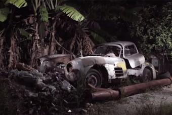 Ritka sirályt találtak Kubában