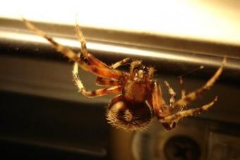 Pók okozott halálos balesetet