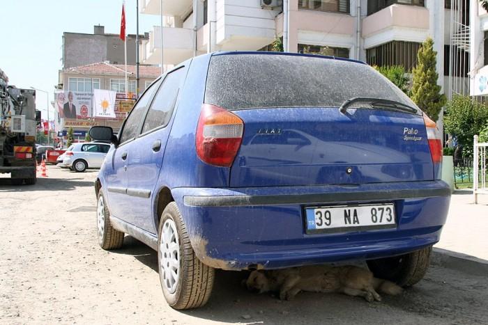 Kutya hűsöl az autó alatt. Mindennapos látvány.