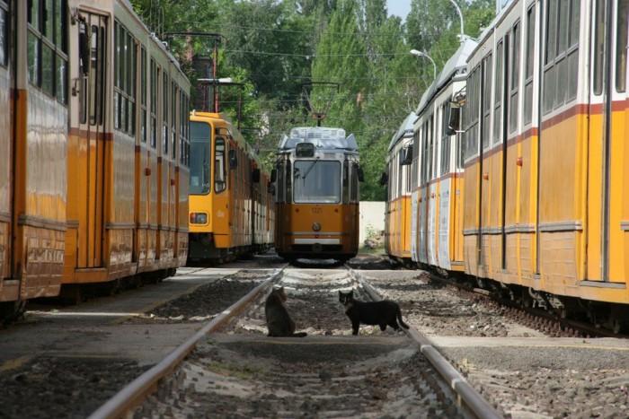 Az új gazdára váró villamosok a Károly körút 7. alatti remiz hátsó sínpárjain pihennek barátságos cicák társaságában