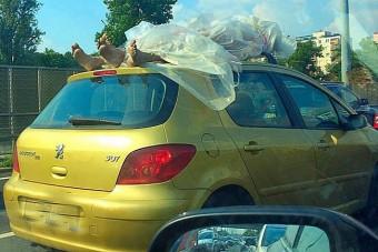 A nap képe - valószínűleg műanyag bábukat vittek egy kocsi tetején