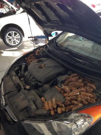 Valami furcsa szagot éreztem a motortér felől, ezért hoztam be.