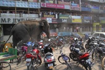 Fotókon az autógyilkos megvadult elefánt