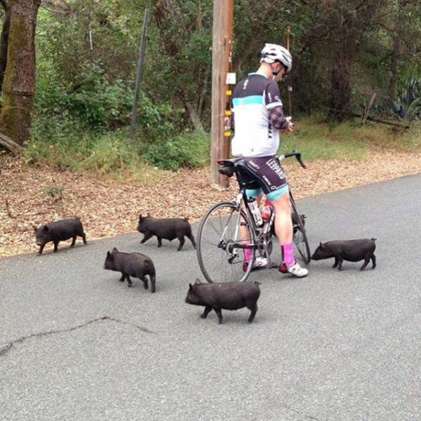 all_about_bicycle_funnies_and_crazies_640_07