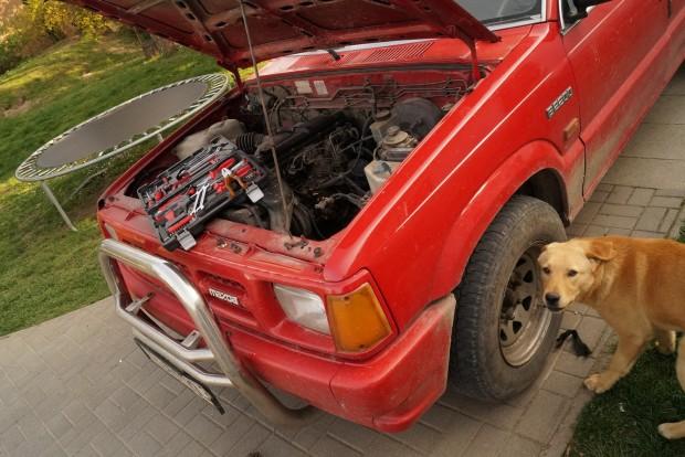 Karaj, a világ legbutább kutyája segített belecsöpögtetni a rózsaszín trutyit a cellákba
