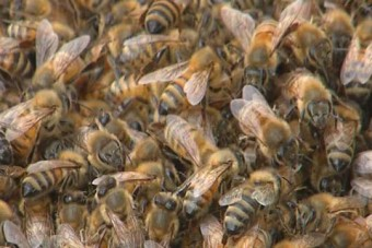 Méhek szálltak meg egy parkolót
