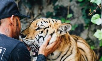 F1: A tigris kifeküdt Lewis Hamiltontól