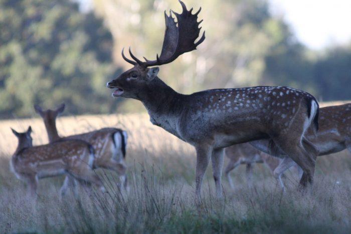 2011.09.19 vadászatok 404