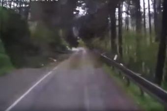 Videón, ahogy az erdő rátámad egy autóra