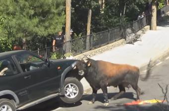 Őrült videó egy terepjárót öklelő vad bikáról