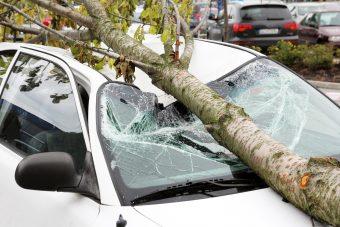 A természet visszavág: madárkula és tetűragacs az autón
